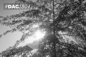 DAG1804